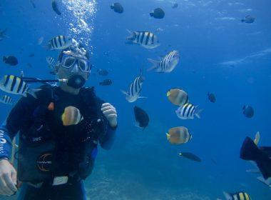 ボラカイ島に来たら・・・ダイビングを